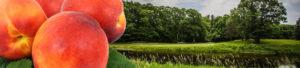 Bruce Hills Peach Festival Classic Golf Tournament